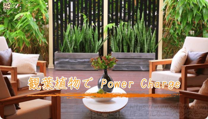 部屋にグリーンの観葉植物でパワーチャージ