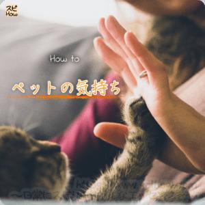 【ペットの気持ち】を知る方法!初回無料で利用出来るライントーク占いの口コミ
