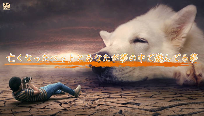 亡くなったペットとあなたが夢の中で遊んでる夢