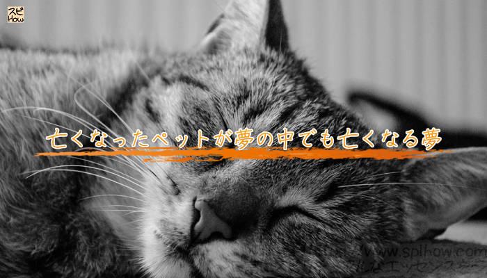 亡くなったペットが夢の中でも亡くなる夢