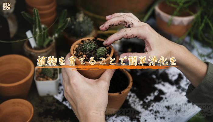 植物を育てることで簡単浄化をのアイキャッチ画像